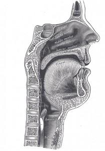 Sagittalmouth1